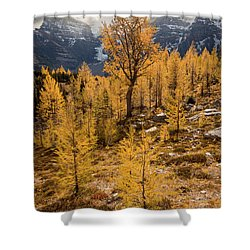 Larch Family Shower Curtain