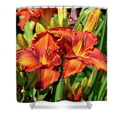 Large Deep Orange Tiger Lilys Shower Curtain