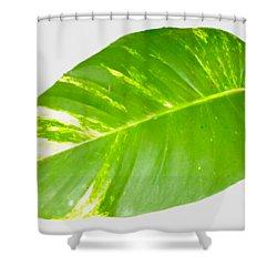 Shower Curtain featuring the digital art Large Leaf Art by Francesca Mackenney