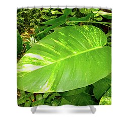 Shower Curtain featuring the photograph Large Leaf by Francesca Mackenney