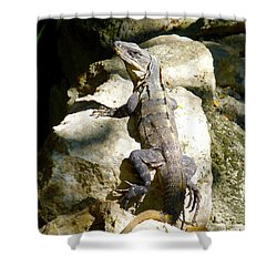 Shower Curtain featuring the photograph Large Lizard M by Francesca Mackenney