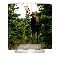 Large Moose Shower Curtain