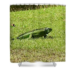 Large Sanibel Iguana Shower Curtain
