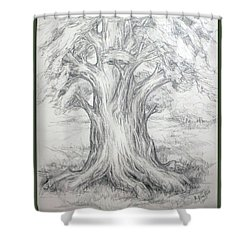 Large Shady Tree Shower Curtain by Ruth Renshaw