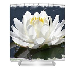Large Water Lily With White Border Shower Curtain by Carol Groenen