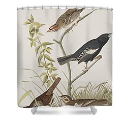 Lark Finch Prairie Finch Brown Song Sparrow Shower Curtain by John James Audubon