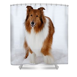 Lassie Enjoying The Snow Shower Curtain