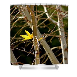 Last Leaf Shower Curtain by Kume Bryant