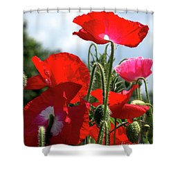 Shower Curtain featuring the photograph Last Poppies Of Summer by Baggieoldboy
