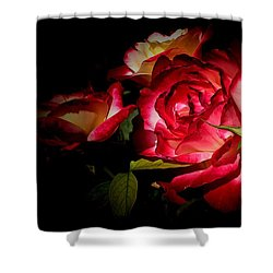 Last Summer Roses Shower Curtain