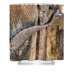 Shower Curtain featuring the photograph Latched by Isabella F Abbie Shores FRSA