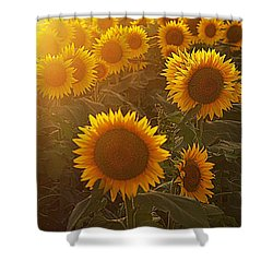 Late Afternoon Golden Glow Shower Curtain