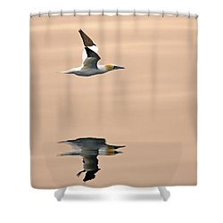 Late Arrival Shower Curtain by Tony Beck
