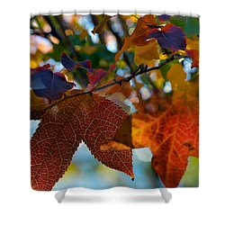 Late Autumn Colors Shower Curtain