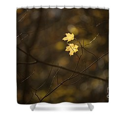 Late Autumn Light Shower Curtain by Diane Diederich