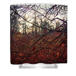 Late Autumn Morning Shower Curtain