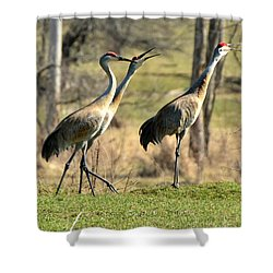 Late Winter Song Shower Curtain