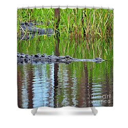 Shower Curtain featuring the photograph Later Gator by Al Powell Photography USA