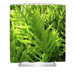 Lauae Fern Shower Curtain