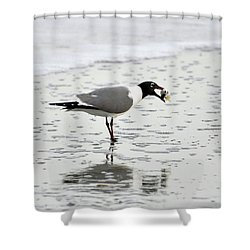 Laughing Gull Meal Shower Curtain by Al Powell Photography USA