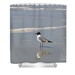 Laughing Gull Reflecting Shower Curtain by Al Powell Photography USA