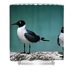 Laughing Gulls Shower Curtain by Sally Weigand