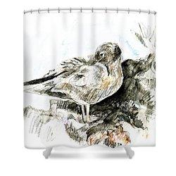 Lava Gull Shower Curtain