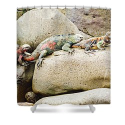 Lava Lizard On Galapagos Islands Shower Curtain by Marek Poplawski