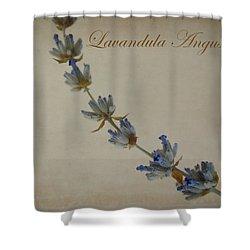 Lavandula Angustifolia Shower Curtain by Julia Wilcox