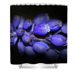 Lavendar Blue Shower Curtain by Kim Henderson