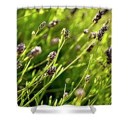 Shower Curtain featuring the photograph Lavender Square by Jerry Sodorff