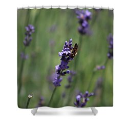 Lavender And Honey Bee Shower Curtain