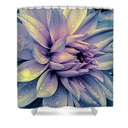 Lavender And Pink Dahlia And Water Drops Shower Curtain by Julie Palencia