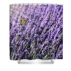 Lavender And Tiger Swallowtail In The Morning Light Shower Curtain by Diane Schuster