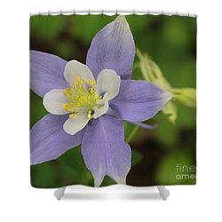 Lavender Blue Wild Columbine Shower Curtain