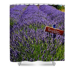 Lavender Bounty 2 Shower Curtain