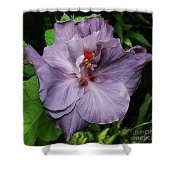 Lavender Shower Curtain by Doug Norkum