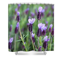 Shower Curtain featuring the photograph Lavender by Erin Kohlenberg