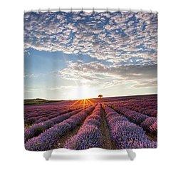 Lavender Shower Curtain by Evgeni Dinev