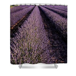 Lavender Field Provence France Shower Curtain by Dave Mills