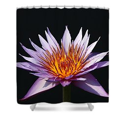 Lavender Fire 1 Shower Curtain