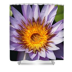 Lavender Fire Open Shower Curtain