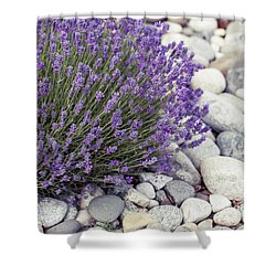 Shower Curtain featuring the photograph Lavender Flower In The Garden,park,backyard,meadow Blossom In Th by Jingjits Photography