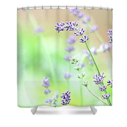 Lavender Garden Shower Curtain
