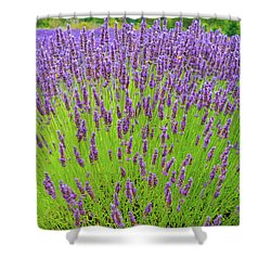 Lavender Gathering Shower Curtain by Ken Stanback