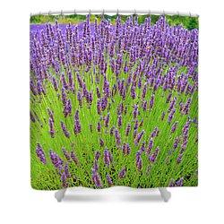 Lavender Gathering Shower Curtain