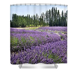 Lavender Hills Shower Curtain