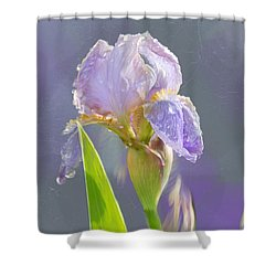 Lavender Iris In The Morning Sun Shower Curtain