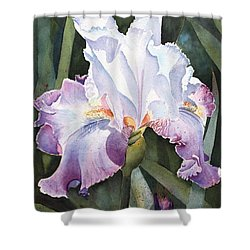 Lavender Light Shower Curtain by Kathy Nesseth