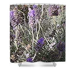 Lavender Moment Shower Curtain
